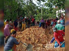 Warga desa Wawoea saat bergotong royong menghamparkan material pembangunan jalan desa.